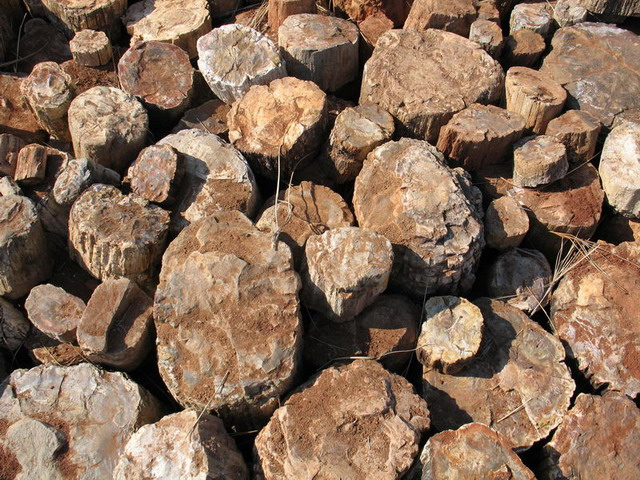 Petrified Wood Quarry